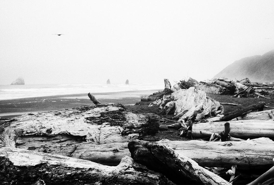 Seagull, Oregon Coast