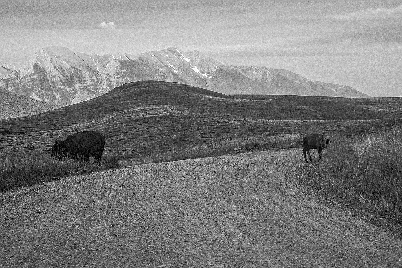 National-Bison-Range-Montana